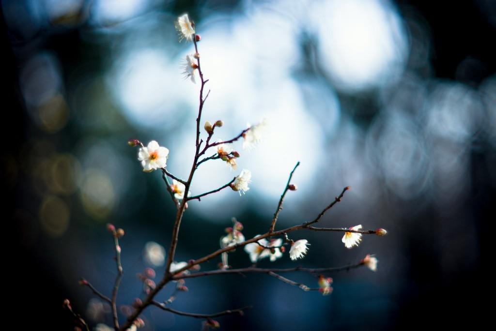 canh hoa trang