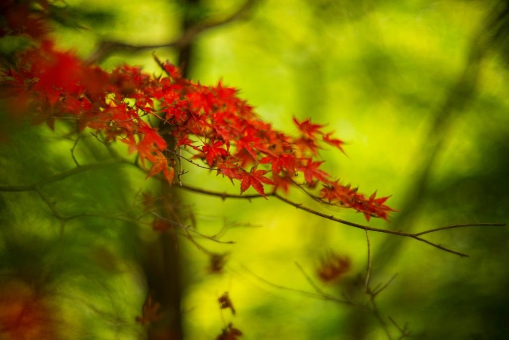 red-between-green