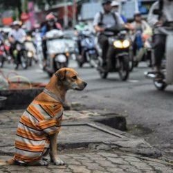 Chó – Người bạn tốt nhất của con người